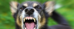 featured-image-dog-bites
